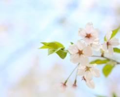 春には冷え性に要注意